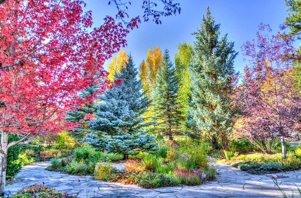 vail-walking path, foliage