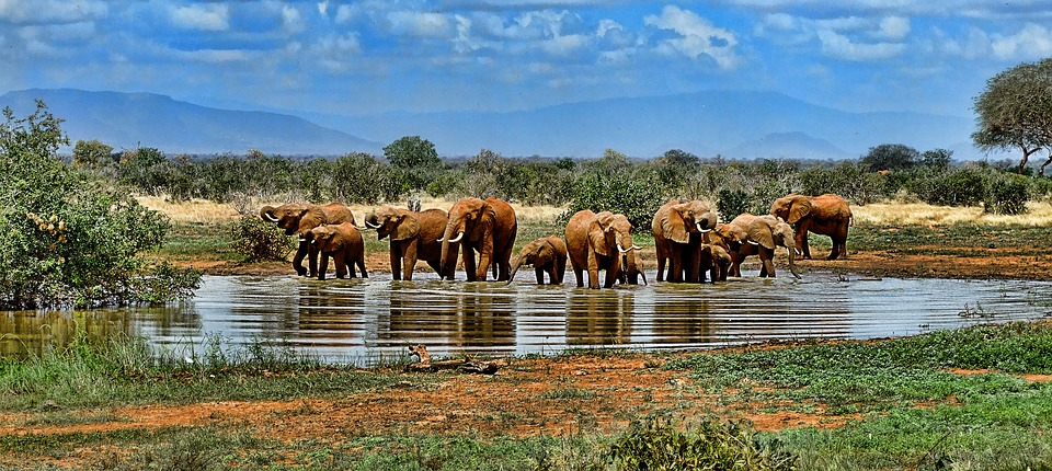 Elephant in a watering hole