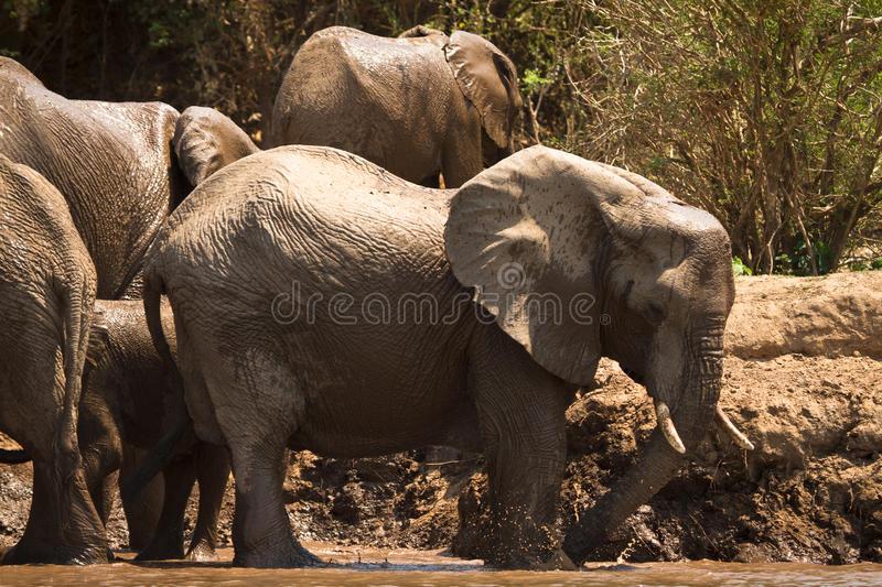 lower-zambezi-