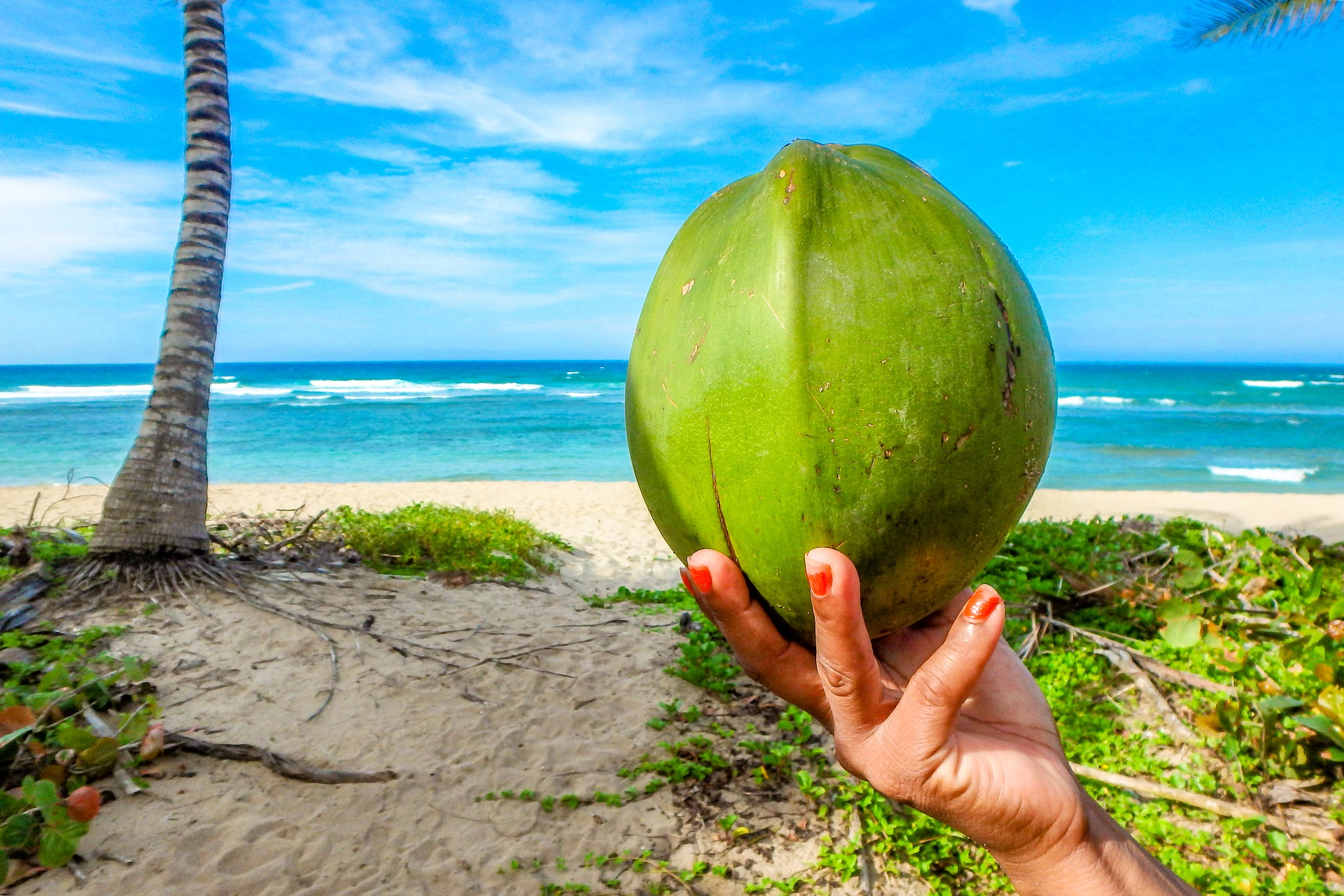 coconut on a beach in Seychelles