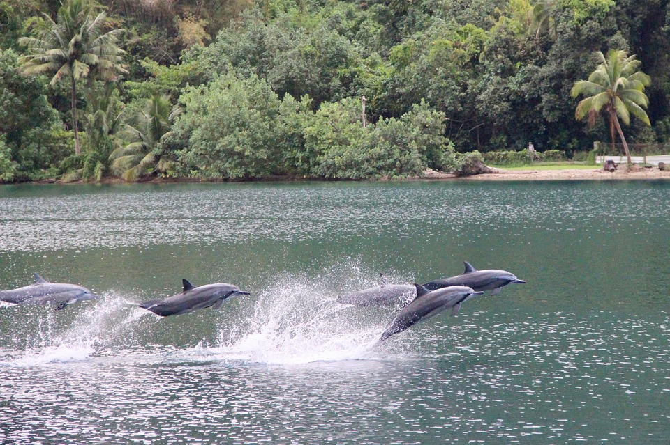 dolphins in the waters