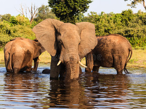 The best National parks in Africa