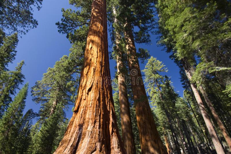 Yosemite national park California
