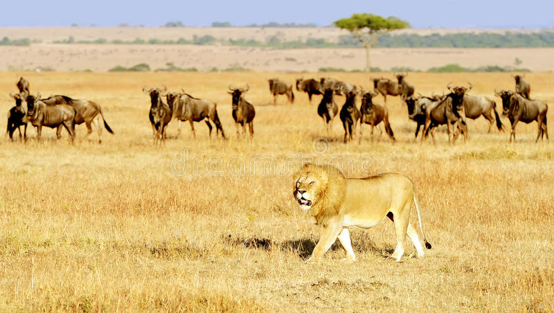 masai-mara-national-reserve-safari-southwestern-kenya