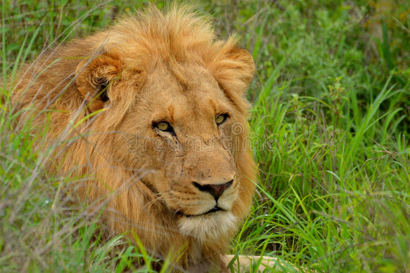 kruger-national-park-south-africa-