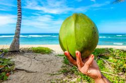 coconut on a beach in Seychelles