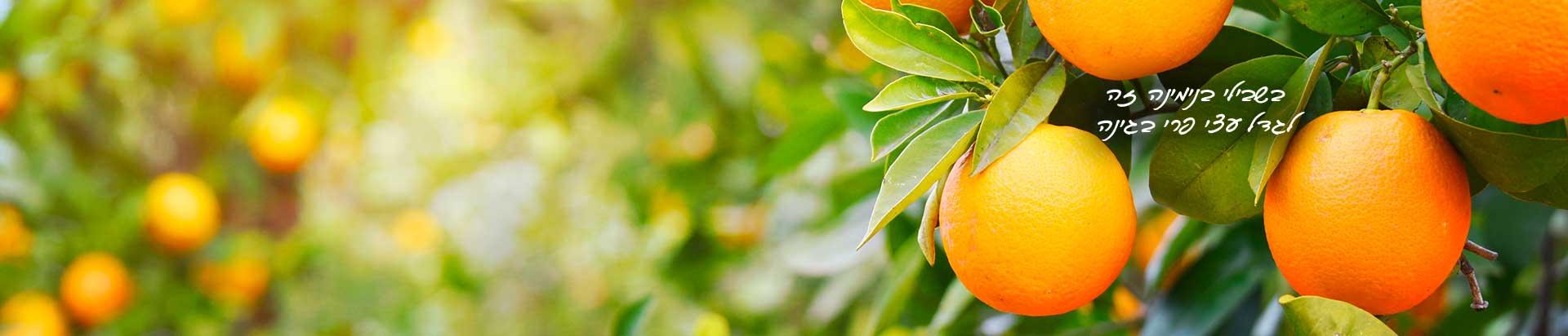 בשבילי בנימינה זה לגדל עצי פרי בגינה