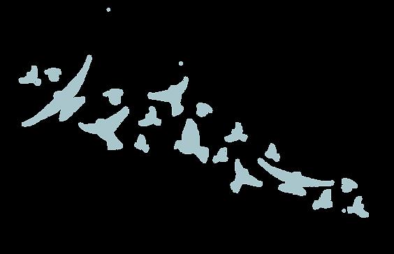 Birds 2019-07.png