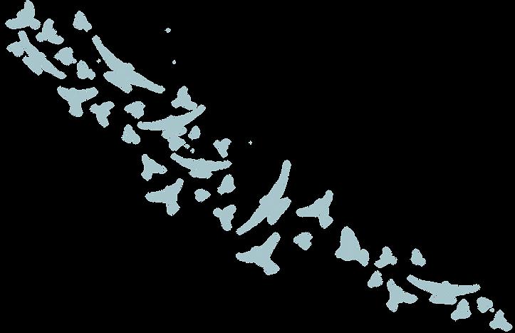 Birds 2019-06.png