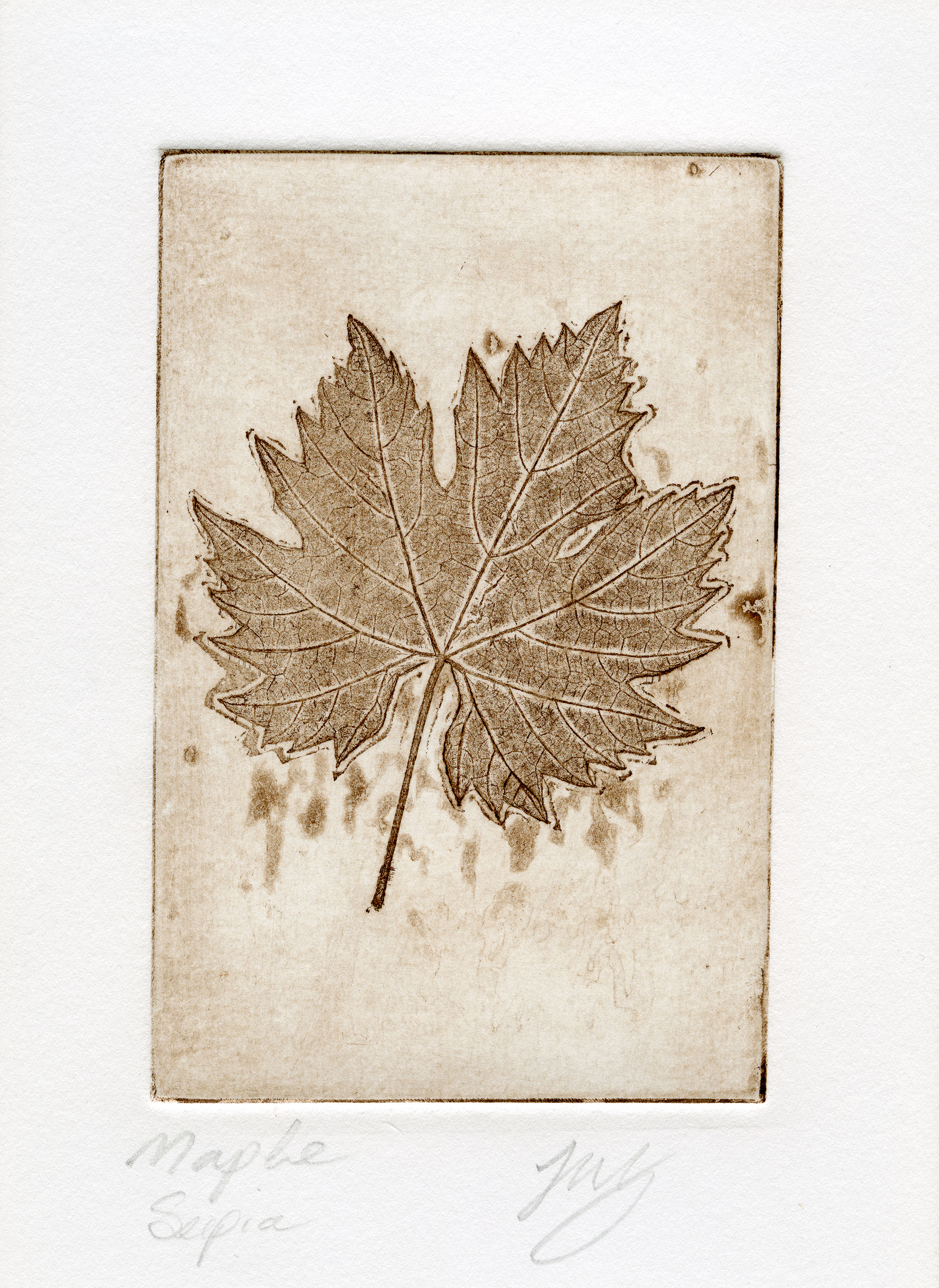 sepia maple