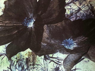 Cosmos. Botanical inspiration!