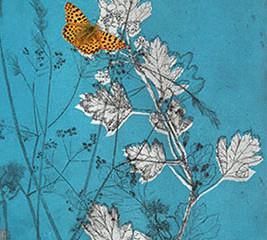framed print of Birling Butterflies!