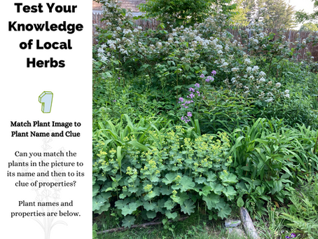 Test Your Knowledge of Local Herbs (Herbal I.D. Match)