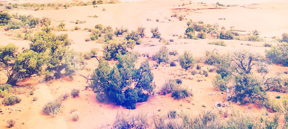 mojave-desert_4x5ratio_edited.jpg