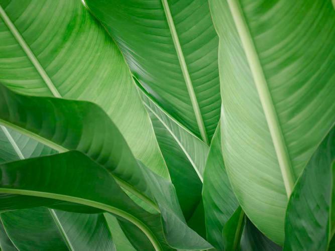 Resort leaves