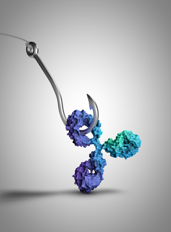 Fishing for antibodies cover