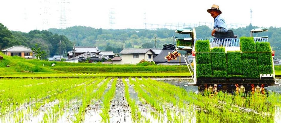 最高品質の米の価値を確かなものとするために
