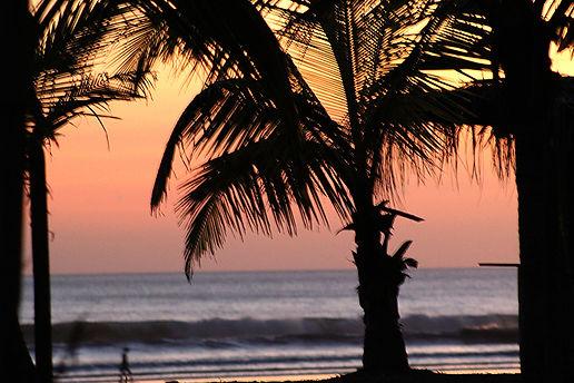 Palmtreesettingsun.jpg