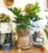 New year, new....plant friends!_._.jpg