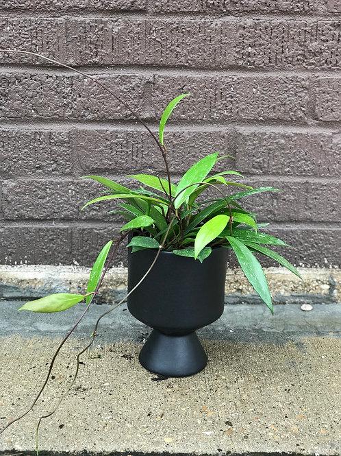 Plant/Pot Combo