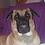 Thumbnail: Portrait Numérique de votre animal d'après votre photo à télécharger HD
