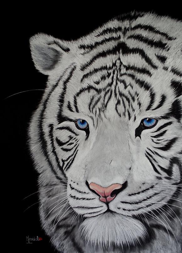 tigre blanc4.JPG