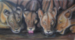 lionnes22.jpg