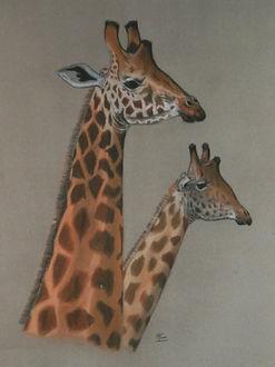 girafes4.jpg