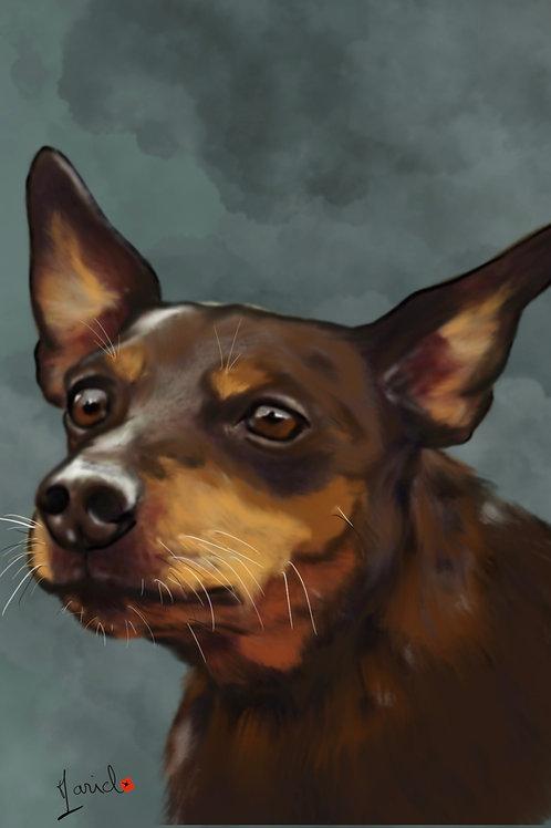 Portrait Numérique de votre animal d'après votre photo à télécharger HD