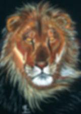 vieux lion.jpg
