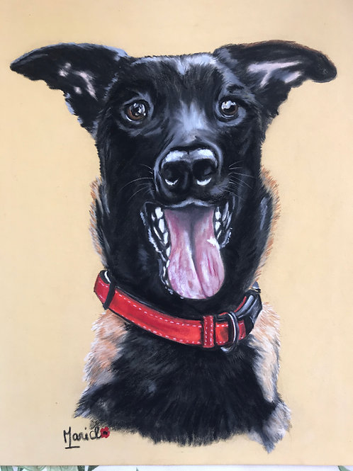 Portrait au pastel de votre chien d'après votre photo, 24X32 cm