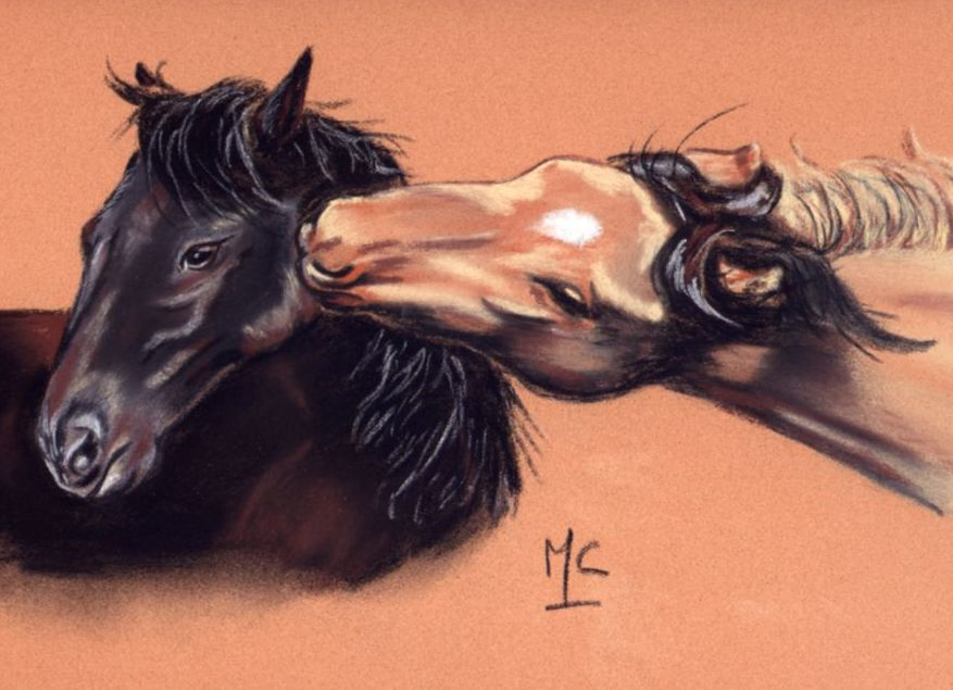 bisou de cheval