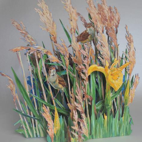 Reed warblers, sedge and flag iris