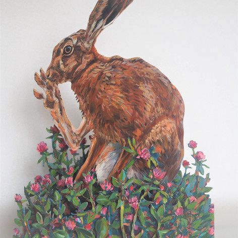 Hare and red clover