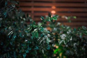 restaurant plants