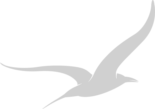 bird-solo_hellgrau.png