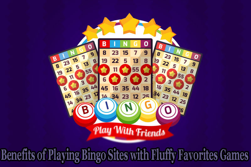 Bingo Sites with Fluffy Favorites