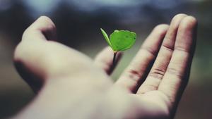 sustainable world fight food waste