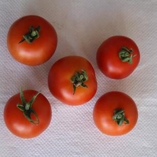 Class 15 5 Tomatoes (Ed Janman)