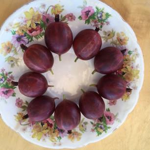 Class 21 - dish of gooseberries (Ms Rosemary Marshall)