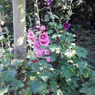 General Garden Images (Mrs M Talbot)
