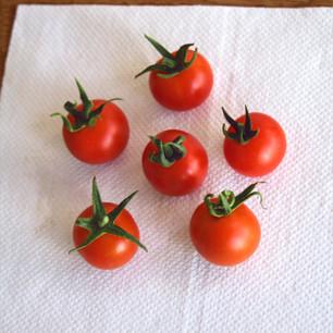 Class 16 6 Cherry-type tomatoes (Ed Janman)