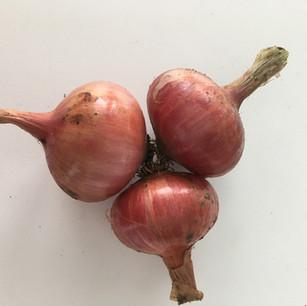 Class 2 - 3 onions (Mrs Julie Cox)
