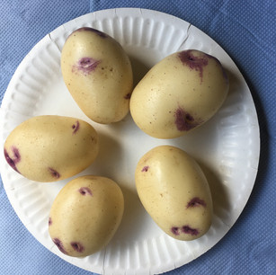 Class 5 - 5 coloured potatoes (Mr Lyn Cornelius)