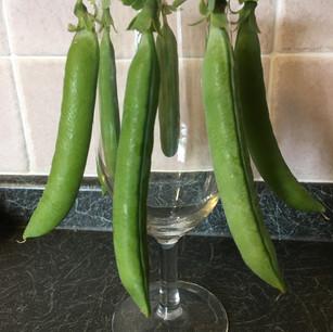 Class 7 - 7 Pods of Peas (Mr Lyn Cornelius)