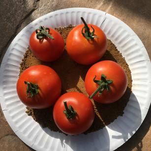 Class 15 - 5 tomatoes (Mr Lyn Cornelius)