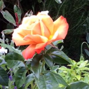 General Garden Images (Mrs M Brown)