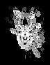 aranha white.png
