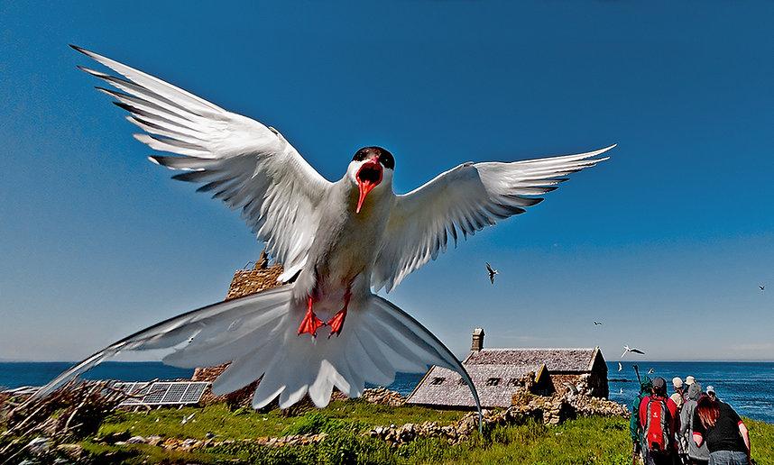 rd07-1st-0353_ the_ birds.jpg