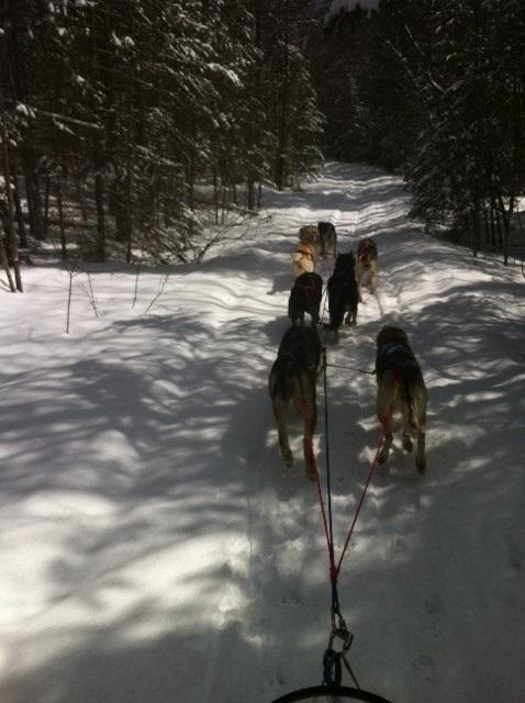Dogsledding Fun
